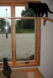Cat on Window Shelf